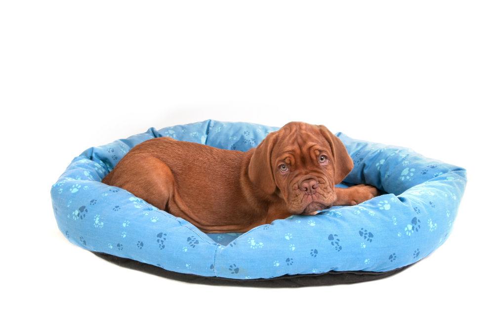 How Big Should a Dog Bed Be