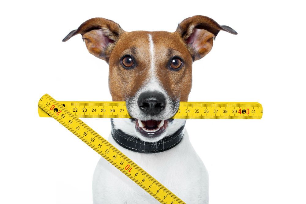 Measure your Dog-How Big Should a Dog Bed Be
