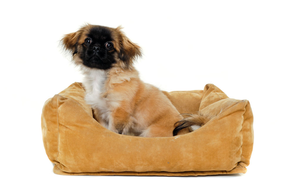 Remove Any Nasty Stains-How to Wash a Dog Bed with Stuffing