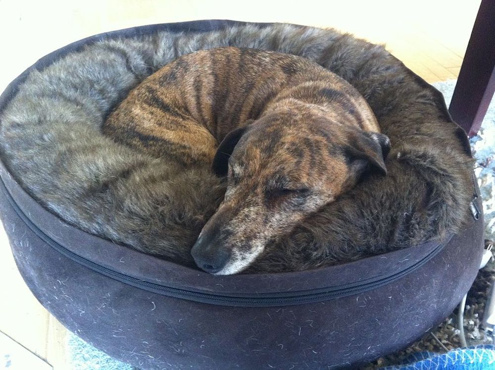Sharing Dog Beds | Pawsbazaar